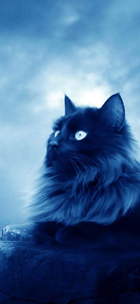 Wild Cat HD Wallpaper [1080x2340]
