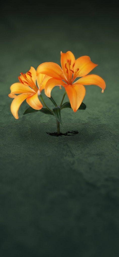 Yellow Flower Painting Art HD Wallpaper [1080x2340]
