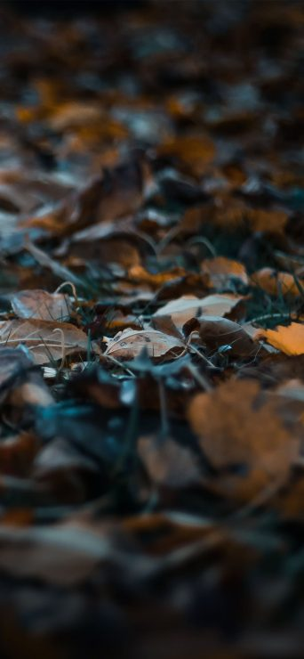 1080x2340-autumn-blur-close-up-depth