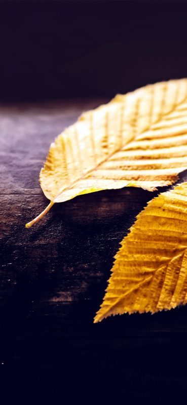 autumn-leaves-close-up-photography-1080x2340