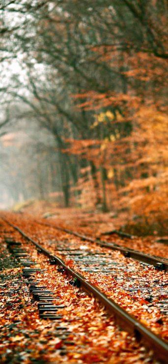 Autumn Railroad HD Wallpaper - [1080×2340]