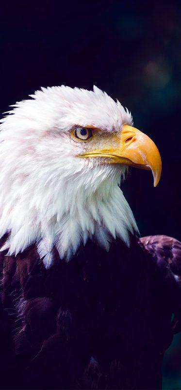 1080x2316-bald-eagle-bird-hd-wallpaper