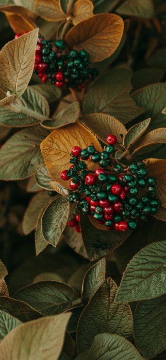 beautiful-berries-close-up-photography-1080x2340