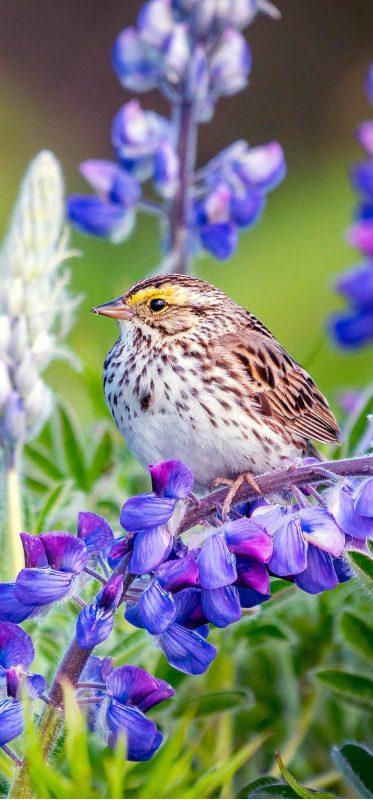 bird-on-lupine-plant-hd-wallpaper-1080x2316