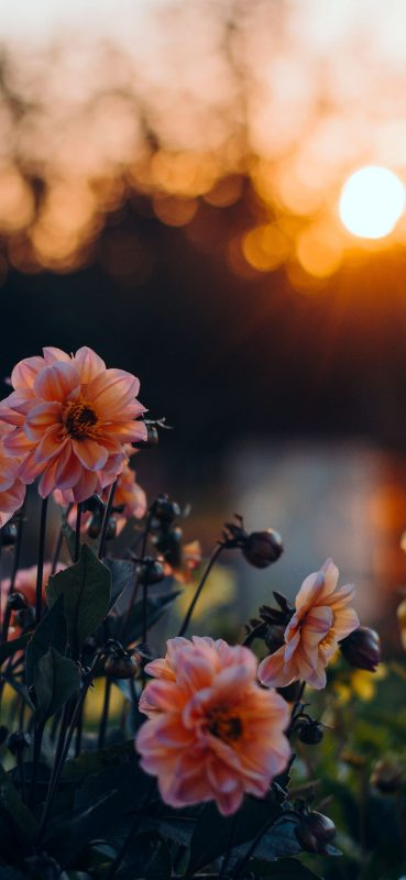 blossom-blur-bokeh-1080x2340
