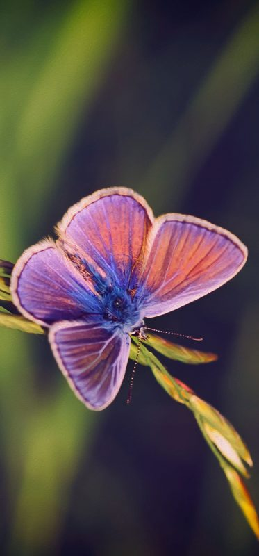 butterfly-hd-photography-background-1080x2316