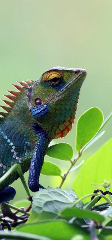 chameleon-animal-wildlife-photography-1080x2316