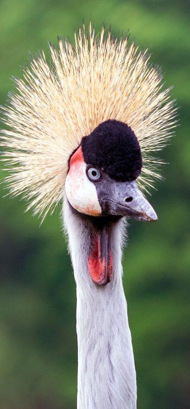 1080x2316-close-up-bird-wildlife-photography-wallpaper