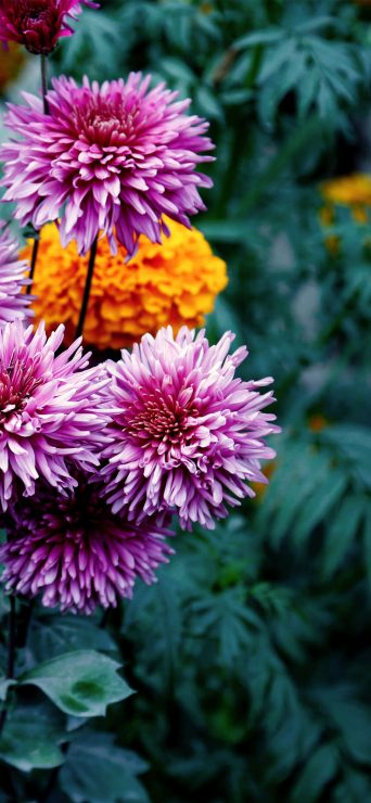 colorful-flowers-in-garden-1080x2340