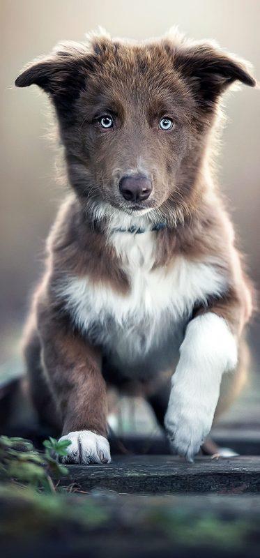 cute-baby-dog-animal-hd-wallpaper-1080x2316