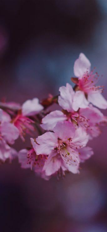 depth-pink-flower-hd-wallpaper-1080x2340