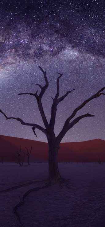 1080x2340-desert-tree-starry-sky