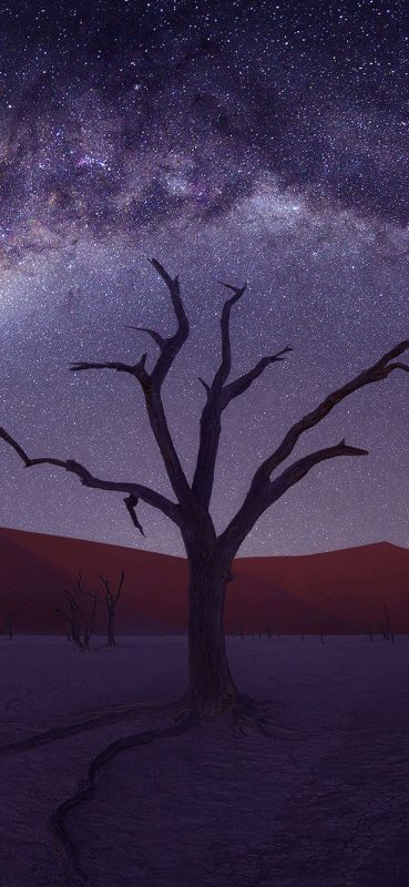 1080x2340-desert-tree-starry-sky
