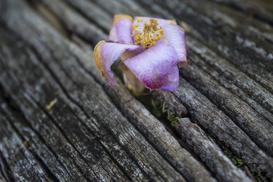 faded-wallpaper-010-5184x3456-Purple-Flower