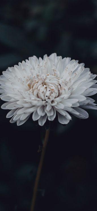 Gorgeous White Flower HD Wallpaper - [1080×2340]