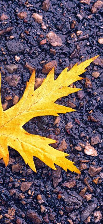 Leaf Fall On Ground HD Wallpaper - [1080×2340]