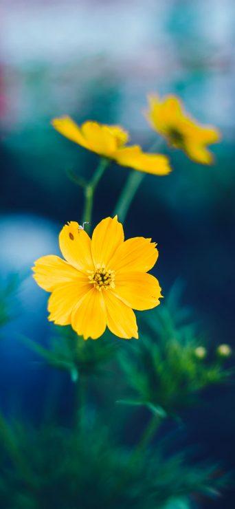 Sunligh Morning Yellow Flower Photography - [1080×2340]
