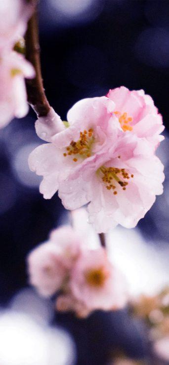 White Flower HD Wallpaper - [1080×2340]