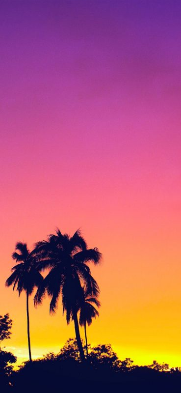 palm-tree-nature-view-1080x2340