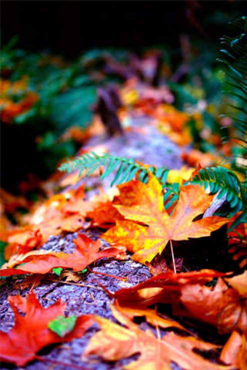 Autumn Leaves HD Photography Wallpaper - [320×480]