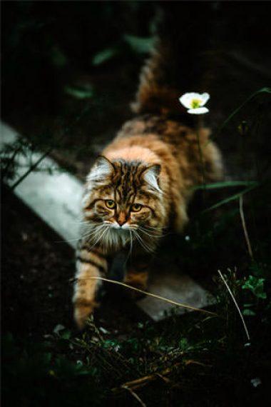 beautiful-cat-photography-wallpaper-320x480