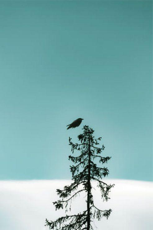 Black Bird Flying On Tree Wallpaper - [320×480]