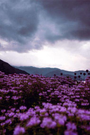 320x480-cloudy-pink-flower-garden-hd-wallpaper