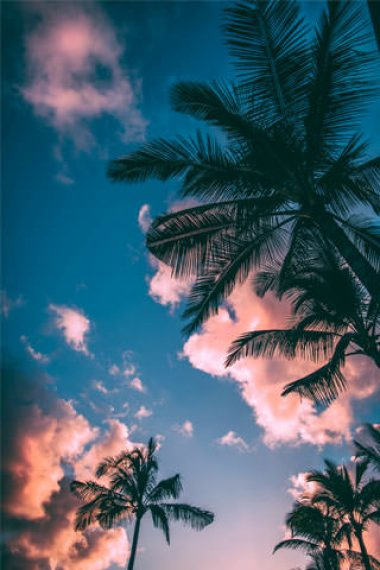coconut-trees-and-blue-sky-wallpaper-320x480
