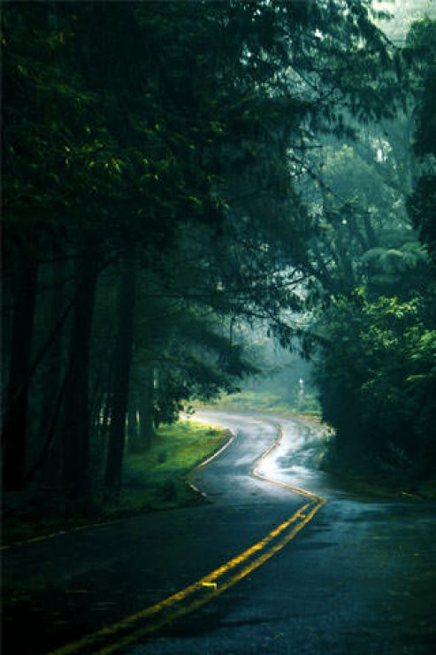 Forest Road Landscape Photography Wallpaper - [320×480]