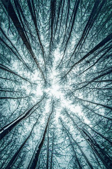 320×480-Sky-View-Form-Forest-Tree-Photography-Wallpaper
