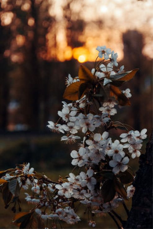 White Petaled Flowers Photography Wallpaper - [320×480]