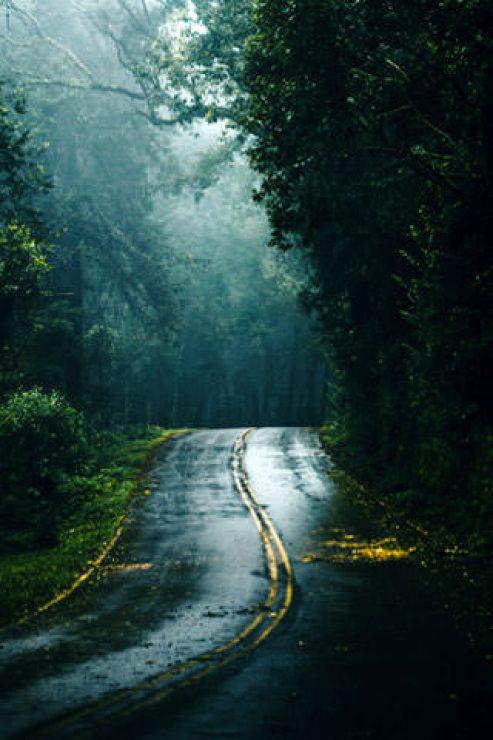 Wild Forest Road HD Wallpaper - [320×480]